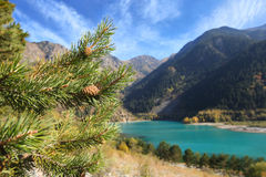 Pine branches near the mountain lake Royalty Free Stock Photos