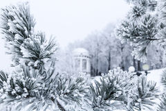 Pine branches with needles covered by frost and gazebo Stock Photos