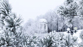 Pine branches with needles covered by frost and gazebo Stock Images