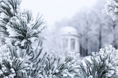 Pine branches with needles covered by frost and gazebo Royalty Free Stock Image