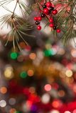 Pine branches and red berries on the bokeh Stock Photo