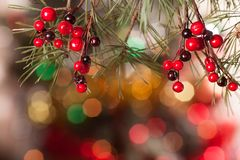 Pine branches and red berries on the bokeh Stock Photos