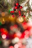 Pine branches and red berries on the bokeh Stock Images