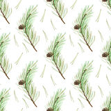 Pine branches seamless pattern. Coniferous twig and pinecone.Watercolor hand drawn illustration Royalty Free Stock Image