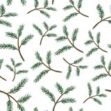 Pine branches seamless pattern. On white background Royalty Free Stock Photo