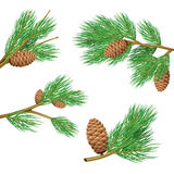 Pine Branches Set. Green pine branches with cones realistic set for decoration  vector illustration Royalty Free Stock Images