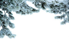 Pine branches in a snow Stock Photos