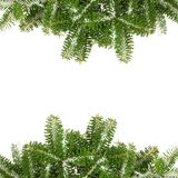 Pine branches with snow Royalty Free Stock Photography