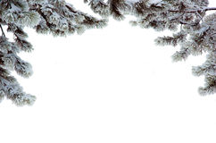 Pine branches in a snow Stock Images