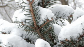 Pine branches in the snow stock video footage