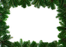 Pine branches on white background Royalty Free Stock Photography