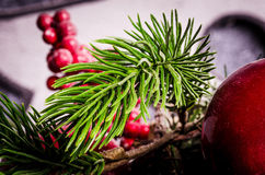 Pine branchlet Royalty Free Stock Photography