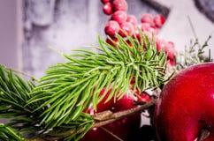 Pine branchlet Royalty Free Stock Photo