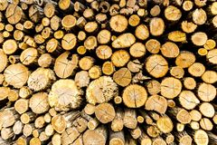 Pine chopped firewood stacked in woodpile royalty free stock image