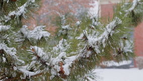 Pine christmas tree winter branch in snow stock footage