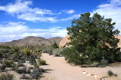Pine City panorama. Hiking trail at Pine City, Joshua Tree National Park, CA Stock Image