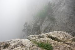 Pine on cliff in dense fog. Small pine on cliff in dense fog Stock Photography