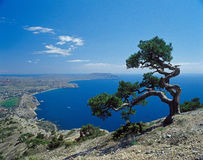 Pine on the cliff Royalty Free Stock Image