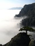 Pine_in_Clouds Lizenzfreie Stockfotos