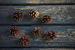 Pine Coan Royalty Free Stock Photography