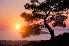 Pine on the coast of the sea at sunset. Pine on the coast of the Mediterranean Sea at sunset Royalty Free Stock Images
