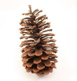 Pine Cone. A pine cone isolated on a white background Royalty Free Stock Photos