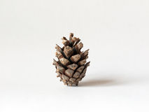 Pine cone. Isolated pine cone against white background Stock Image