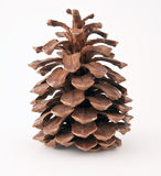 Pine cone. On a white background Stock Images