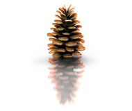 Pine-cone Stock Photography