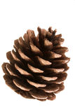 Pine  cone. Pine cone captured over white Stock Photography