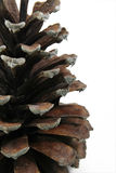 Pine Cone 2 Stock Photo