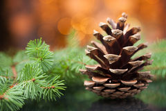 Free Pine Cone Royalty Free Stock Photography - 21812727