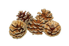 Pine cone. S isolated on white Royalty Free Stock Photography
