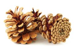Pine Cone. Isolated on white Royalty Free Stock Photo