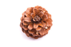 Pine cone Stock Images