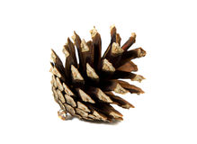 Pine cone. The cone of a pine on a white background Stock Image