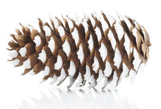 Pine cone. Painted with white colored paint,  on white background Stock Photo