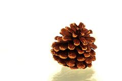 Pine cone. Gold pine cone on white background Royalty Free Stock Photography