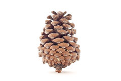 Pine Cone. Balancing Alone On White Stock Photography