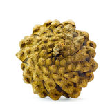 The pine cone. On a white background Stock Photography