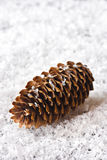 Pine cone. Royalty Free Stock Photos