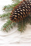 Pine cone. Royalty Free Stock Photo