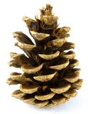 Pine Cone. Image of a pine cone or fir cone on a white background royalty free stock photography