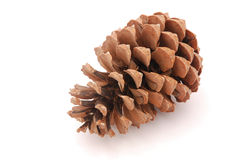 Pine cone. A big brown pine cone from a tree. Image isolated on white studio background Stock Photo