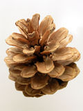 Pine cone. Cone -isolated royalty free stock photo