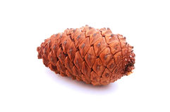 Pine cone. A huge pine cone Stock Photo