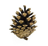 Pine cone. On white background Royalty Free Stock Image