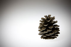 Pine cone. Image of the pine cone on white background stock image