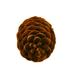 Pine cone. On a white background Stock Image