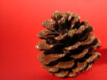 Pine cone. On red ground Royalty Free Stock Photo
